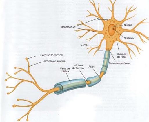 La Neurona | Rincondemente